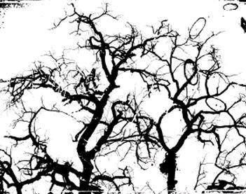 木 枝 ツリー