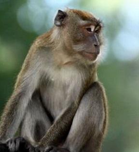 猿 ゴリラ チンパンジー