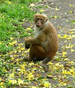 サル モンキー 猿
