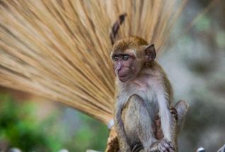 猿 モンキー 付和雷同
