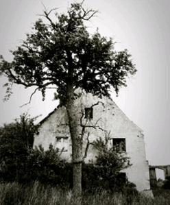 木 古い 枯れる