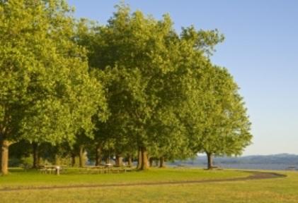 公園 大樹