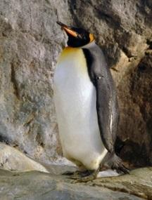 ペンギン 寒い