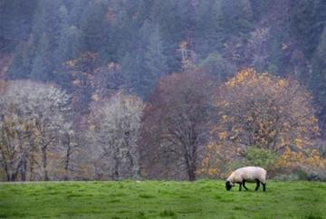 羊 人生 価値観