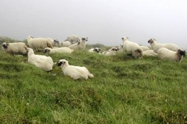 羊 逃避 回避 合理的