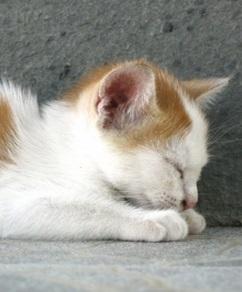 眠る 猫 ダウン
