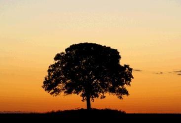 木 樹林 生命