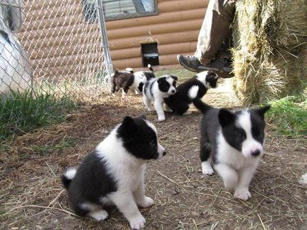 puppies(L).jpg