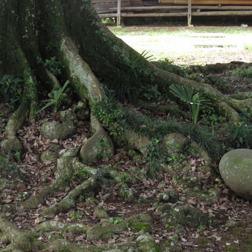 須賀神社ー9