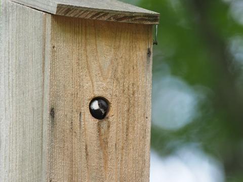 トンボ池巣箱メス140623