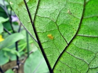 H26_07_06_虫の卵