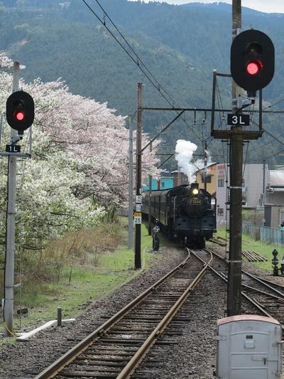 20140400ohigawa_1.jpg