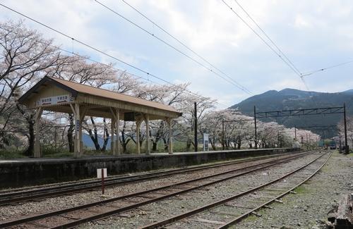20140400ohigawa_6.jpg