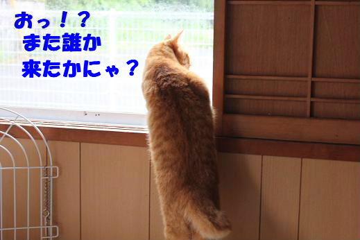 IMG_5286.jpg