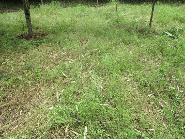 下の畑3_2