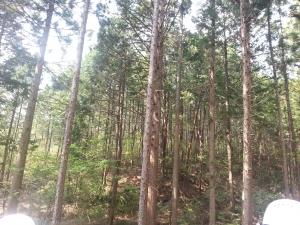 140504森林