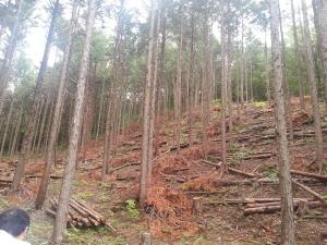 140627森林
