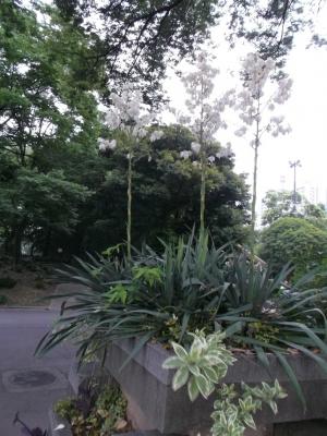 日比谷、きれいな花