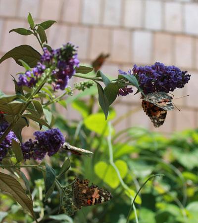 arboretum1405.jpg