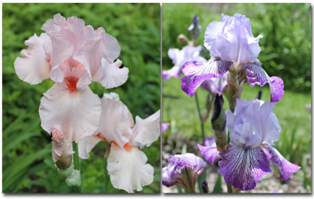arboretum1409.jpg