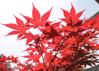 arboretum1413.jpg