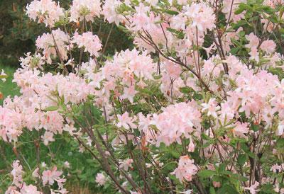arboretum1433.jpg