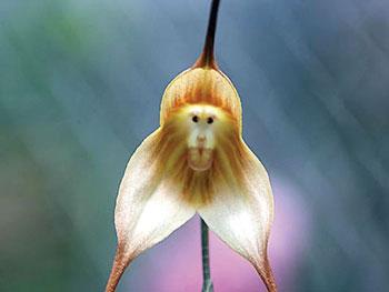 flower-has-monkey-face-1340.jpg