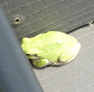 frog06101402.jpg