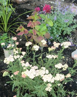 garden07011401.jpg
