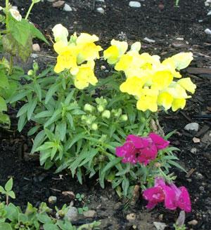 garden07011402.jpg