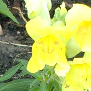 garden07011403.jpg