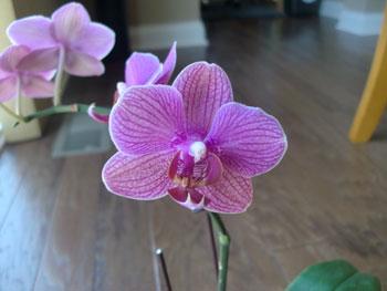 orchidmorph05.jpg