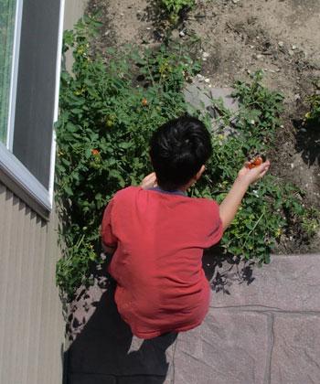 tomatoes1402.jpg