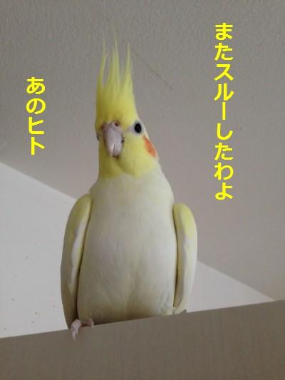 IMG_7450.jpg