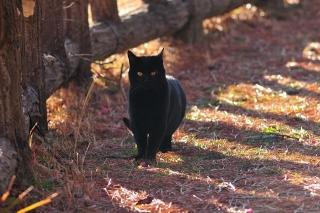 南公園 ネコ