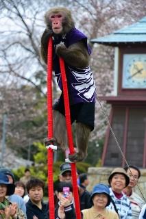 岡崎公園 猿回し