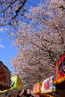 桜と屋台 乙川(菅生川)河川敷