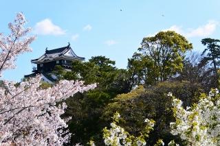 桜と岡崎城