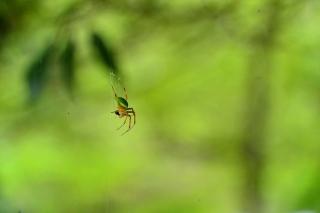 岡崎中央総合公園 蜘蛛
