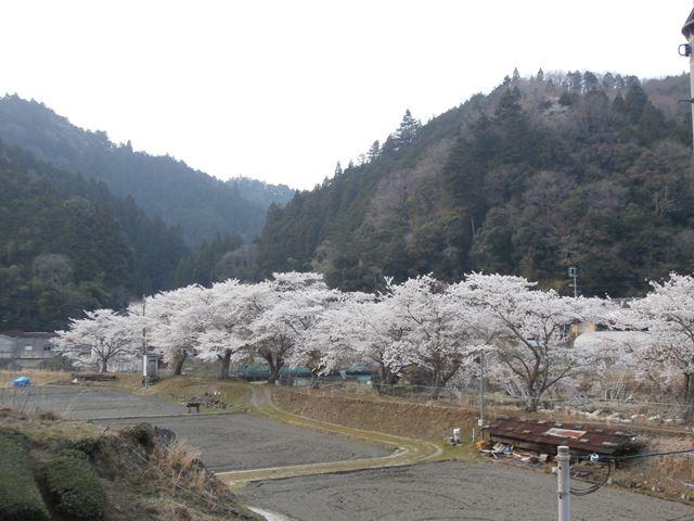 京都府和束町湯船地区