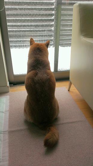 2014028大雪1