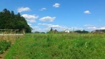 20140510自然農畑