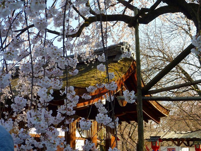 平野神社 2