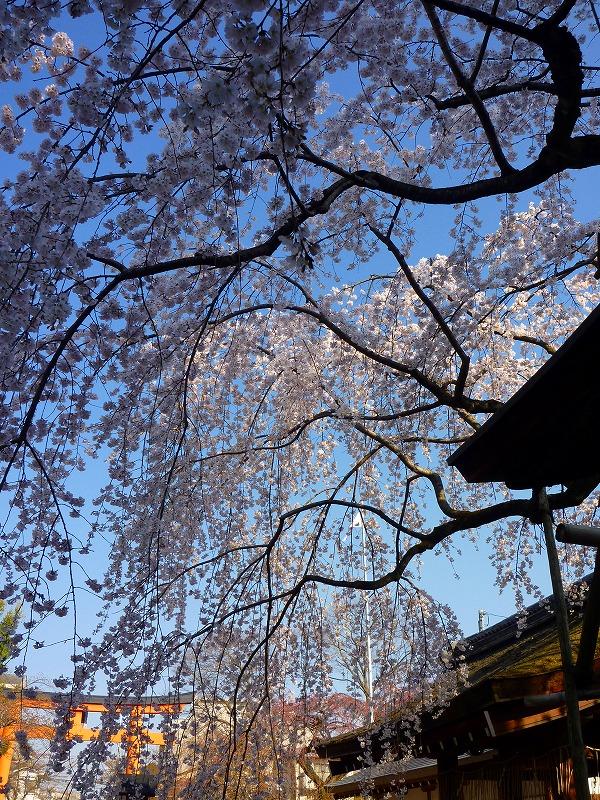 平野神社 3