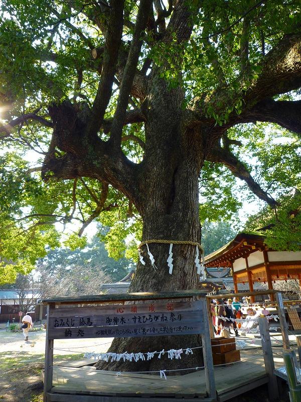 平野神社 御神木