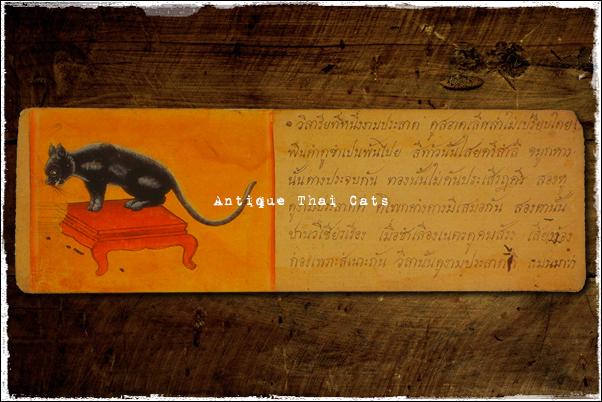猫 cat แมว タイ Thailand ไทย コイの折れ本 khoi books สมุดข่อย
