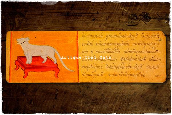 猫 cat แมว タイ Thailand ไทย コイの折れ本 khoi books สมุดข่อย 文化 culture