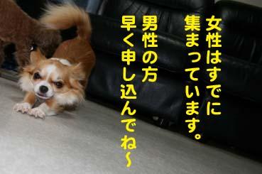 003_201406041550294c6.jpg