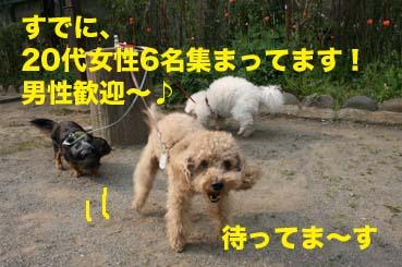 1_20140428164410c0d.jpg