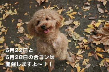 IMG_9065 のコピー